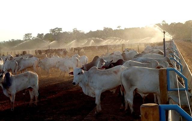 Confinamento de bovinos pdf files